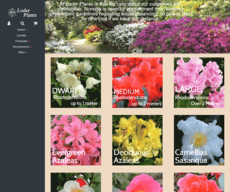 Hortic.com - Welcome to Camellia Grove, Hydrangea Haven & Loder Plants